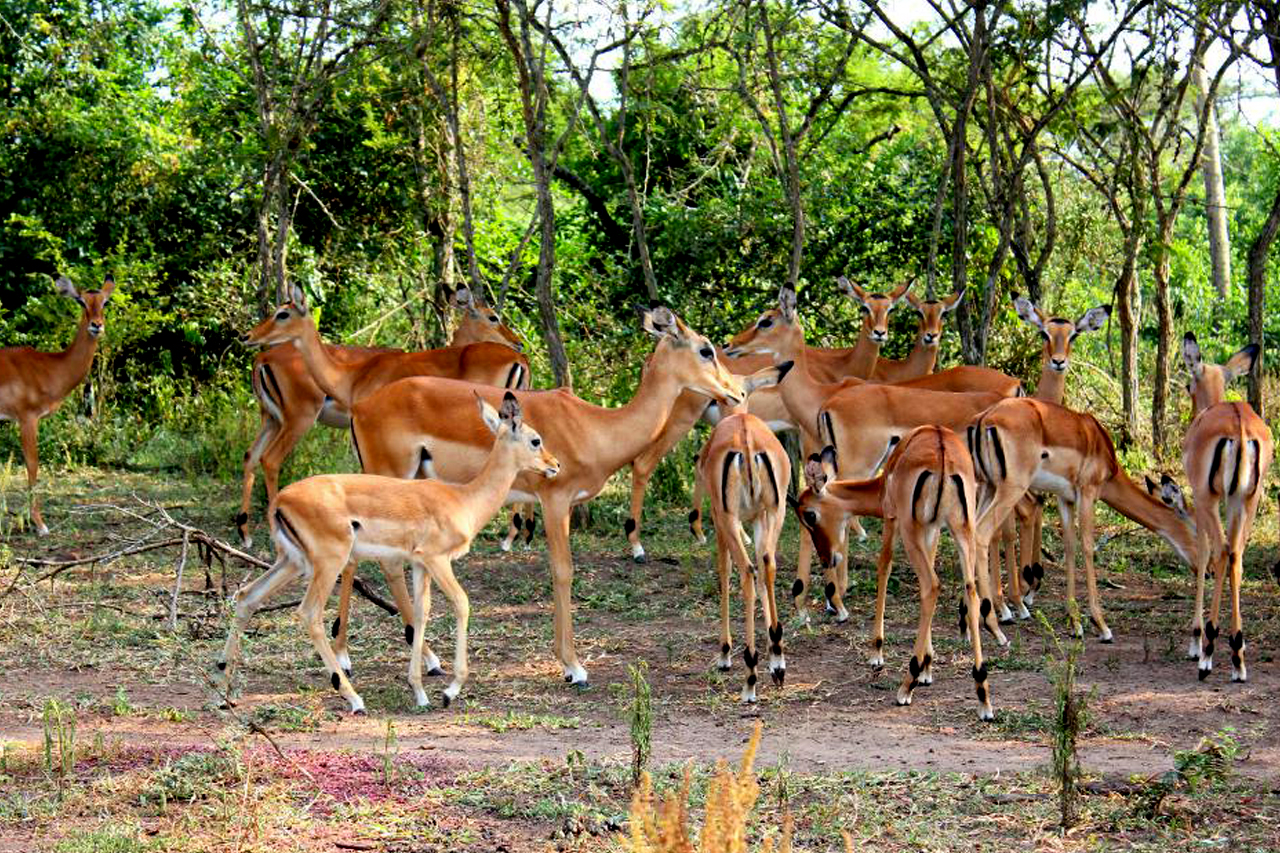 1 Day Lake Mburo safari for a 2 hours' boat ride and wildlife viewing