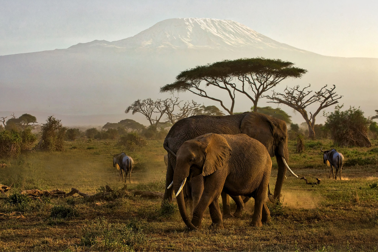 3 Days Amboseli National Park Safari for adventurous game viewing