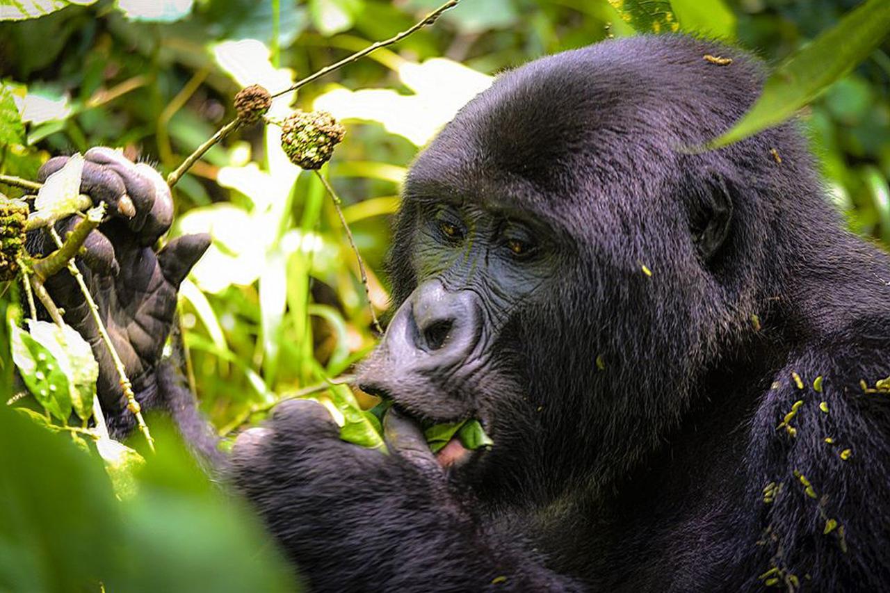 3 Days Uganda Gorilla Trekking Safari from Kigali, Rwanda