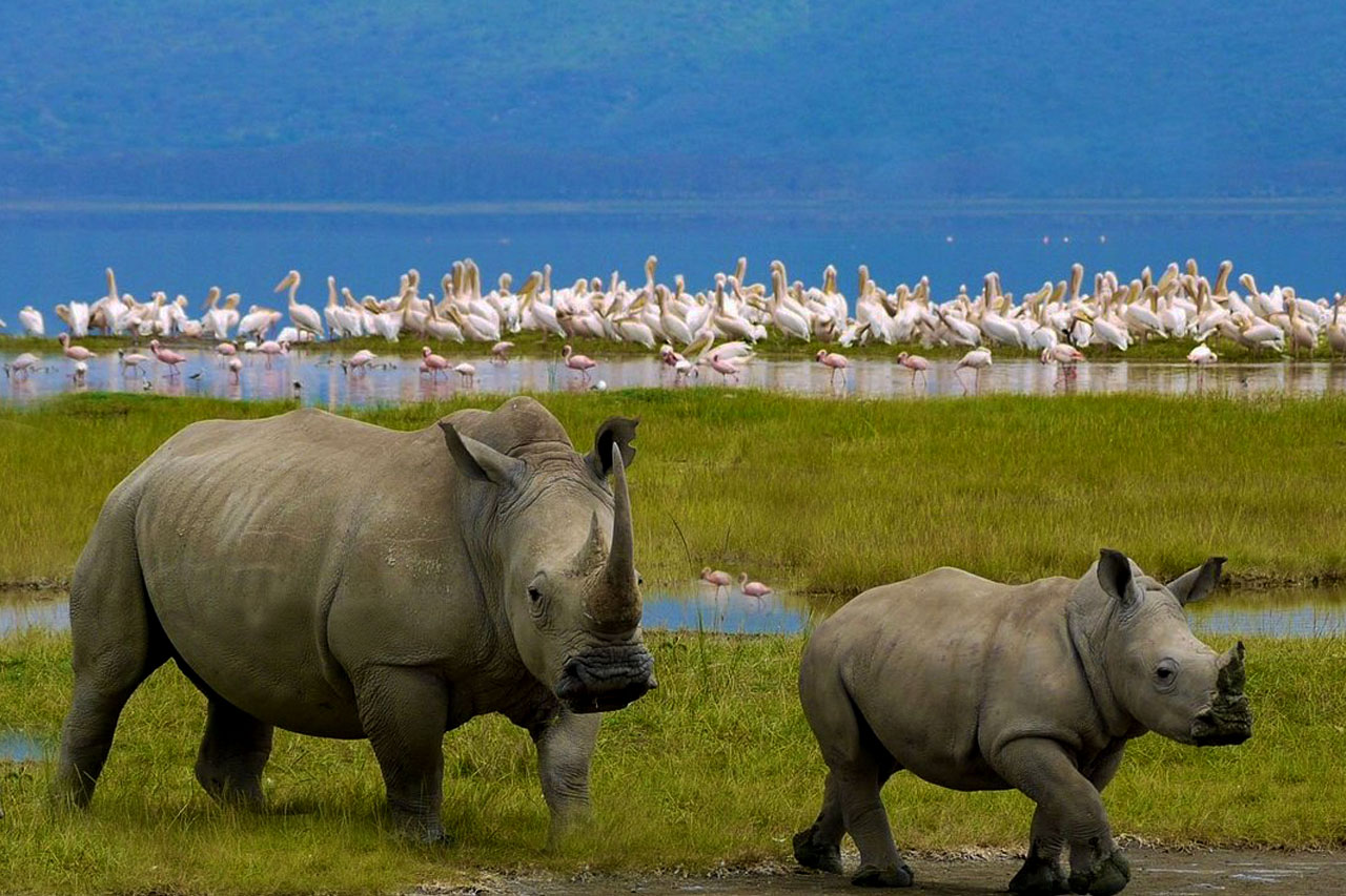 Lake Nakuru national park – The Birders' Paradise