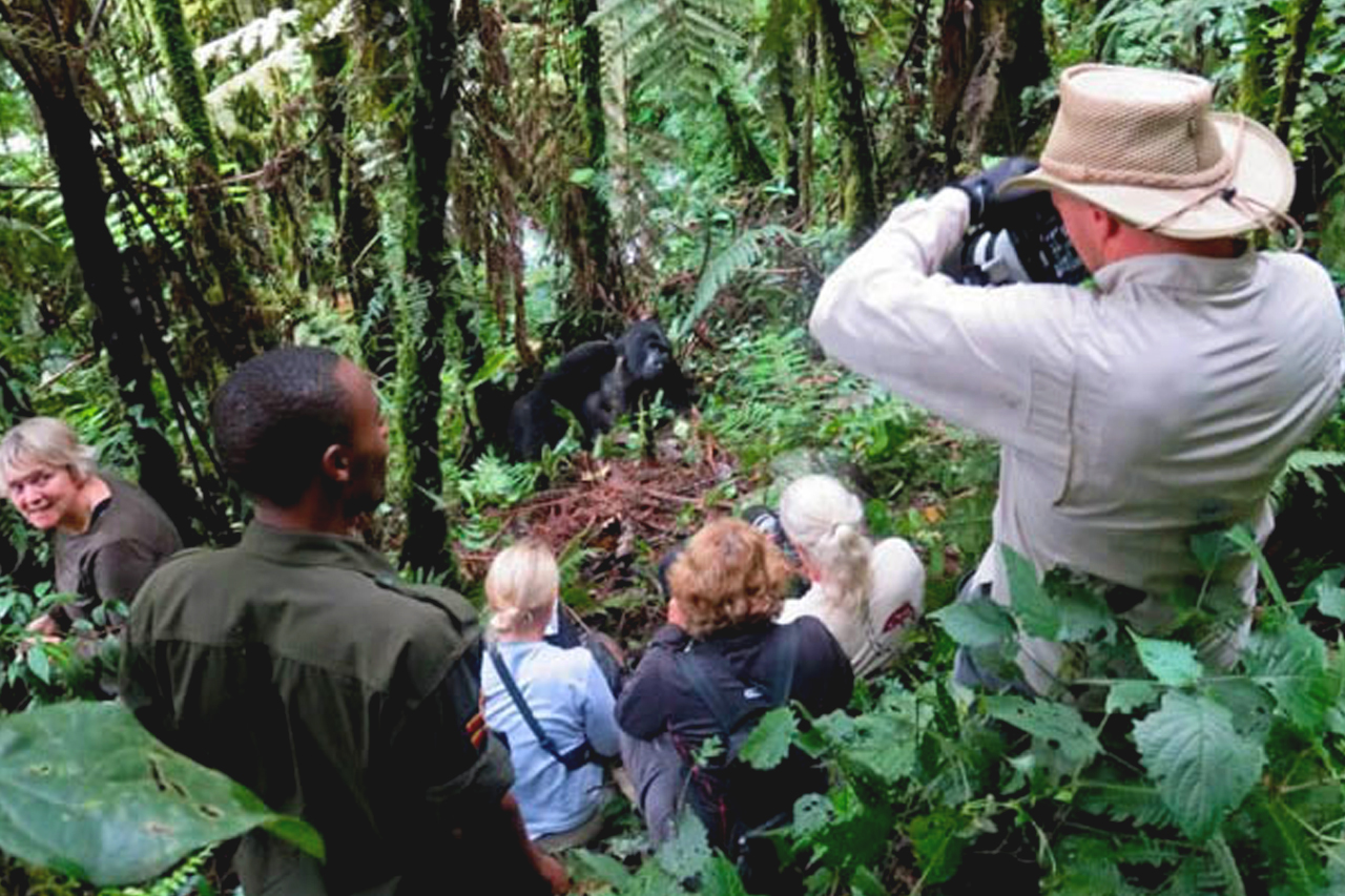 Gorilla habituation experience in Bwindi impenetrable forest