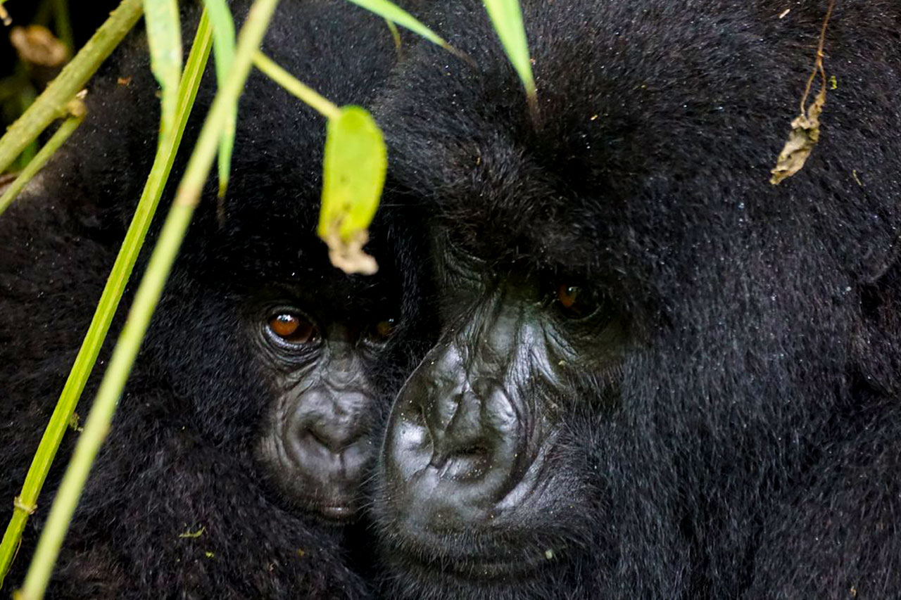 Virunga National Park, the oldest protected and conservation area in Africa